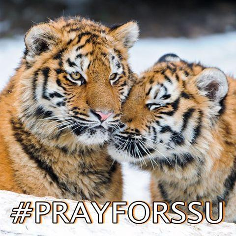 Pray for SSU